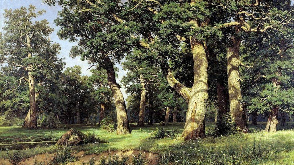 В Запорожской области появится новая дубовая роща на 15 гектарах