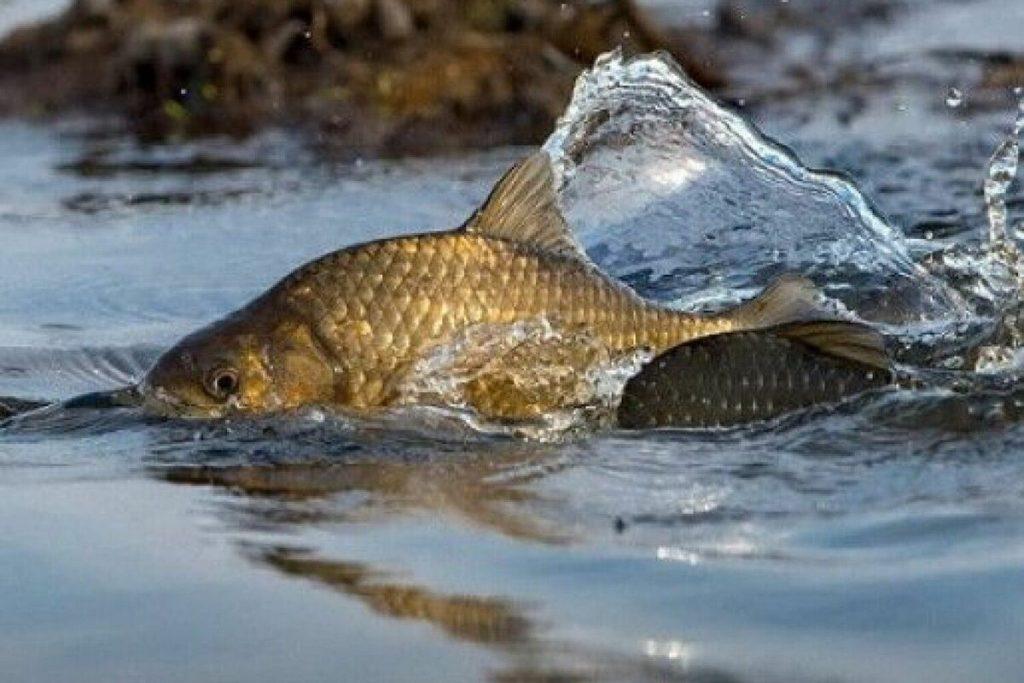 Карасей половить не хотите: штрафы за незаконный вылов рыбы увеличены в десятки раз (СПИСОК)